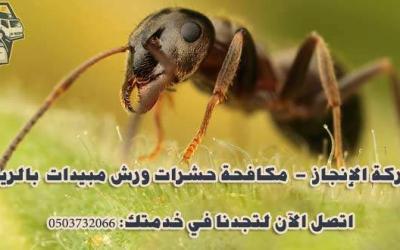 شركة مكافحة النمل الأسود بالرياض 0553979574