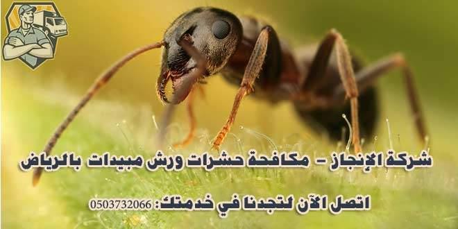 شركة مكافحة النمل الأسود بالرياض 0530040372